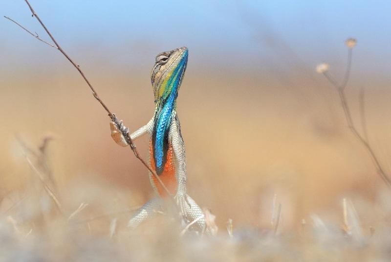 comedy-wildlife-photographer-9-conexao-planeta