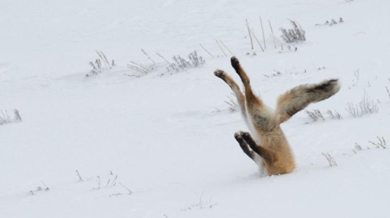 comedy-wildlife-photographer-conexao-planeta