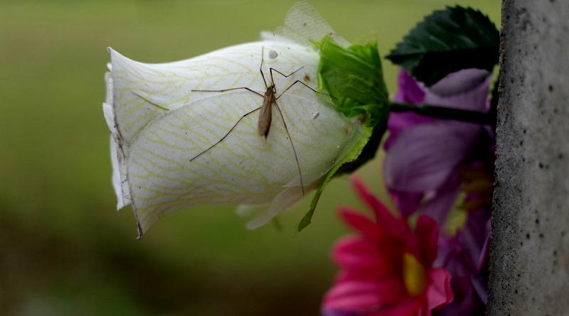 nos-o-verao-os-mosquitos-e-a-natureza-800