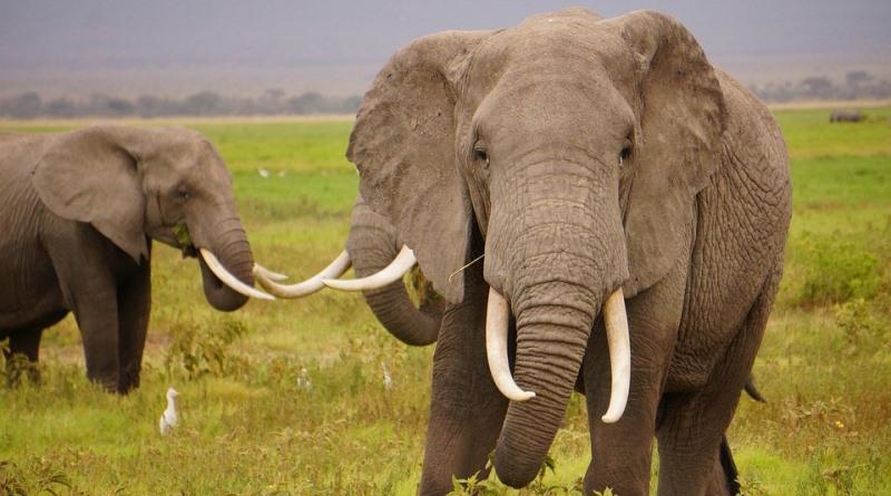China proíbe (finalmente) comercialização de marfim