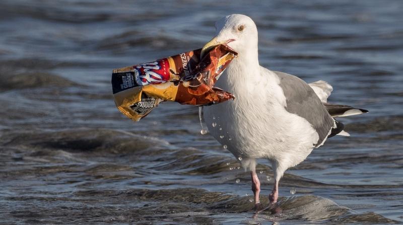 Multinacionais assinam compromisso para reciclagem de 70% de embalagens plásticas