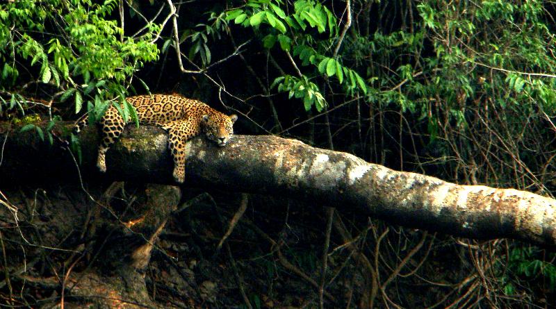 Image result for Animais selvagens são ameaçados constantemente com a caça