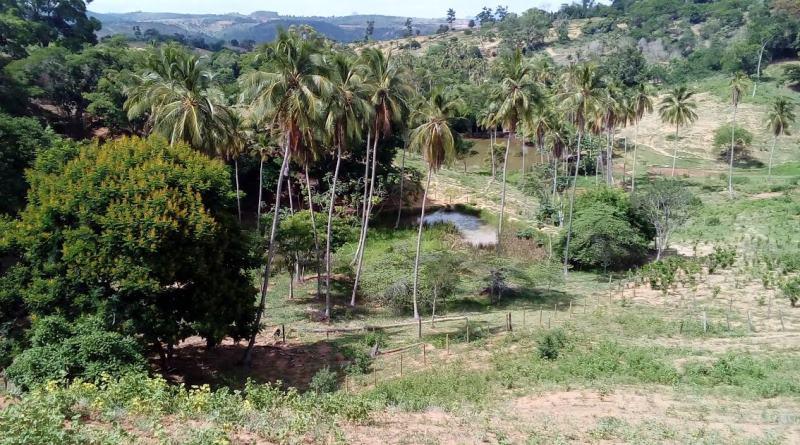 Projeto protege 511 nascentes da bacia do Rio Doce