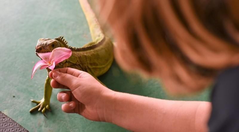 Reptilterapia auxilia tratamento crianças com autismo