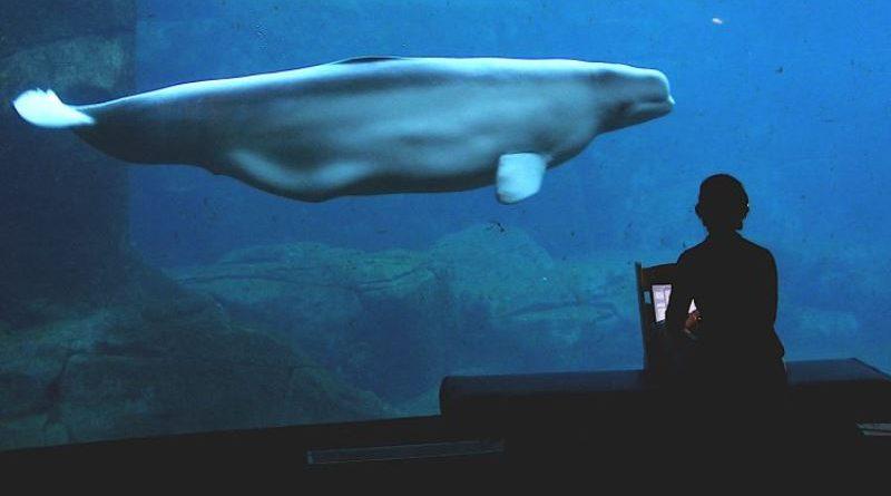 Aquário de Vancouver é proibido de manter golfinhos e baleias em cativeiro