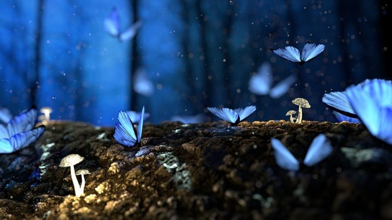 crônica sobre borboletas azuis e nossa conexão com o mundo