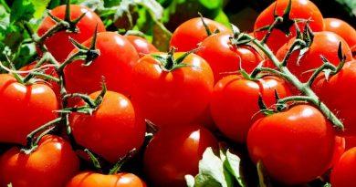 brasileiros criam máquina que limpa frutas e hortaliças sem uso de água