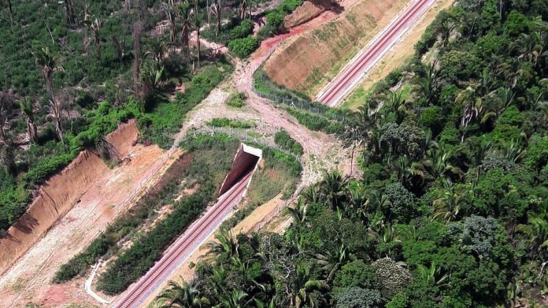Pará ganha primeiro viaduto para travessia de animais do Brasil