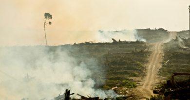 PepsiCo, Nestlé, Unilever, Procter & Gamble e McDonald's são acusados de conivência com desmatamento, denuncia ONG internacional