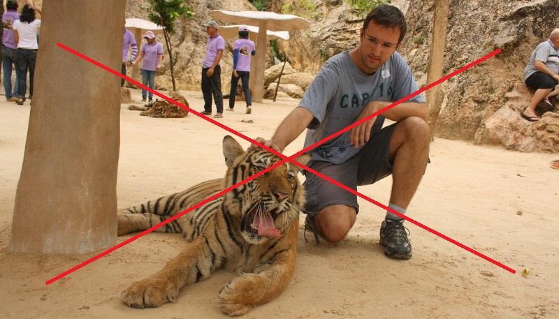 Tinder pede que usuários retirem selfies com tigres de seus perfis