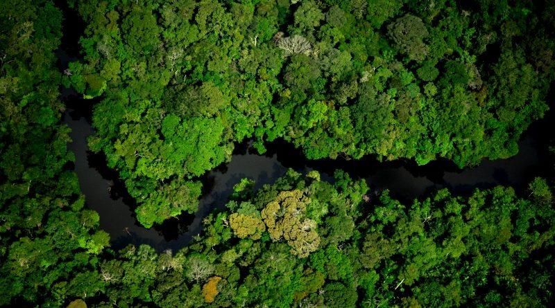 Governo Temer revoga decreto que extinguia reserva na Amazônia. Mas ainda não dá pra celebrar!