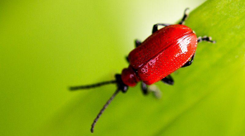 'Armagedon ecológico': grande declínio de insetos voadores coloca humanidade em risco