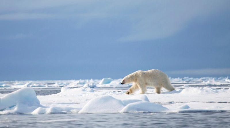 banco mundial realiza concurso de vídeos sobre mudanças climáticas