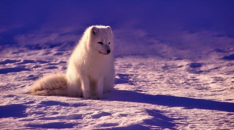 clima no ártico