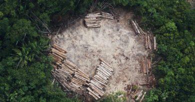 Acusado de assassinatos e tortura, madeireiro do Mato Grosso continua exportando para Europa e Estados Unidos