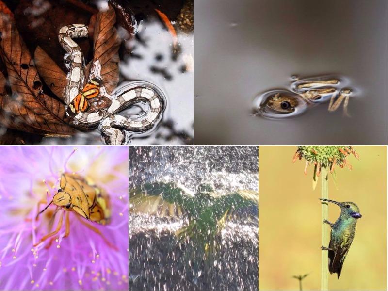 Aqui estão os finalistas do 1o Concurso Conexão Planeta de Fotografia de Animais!