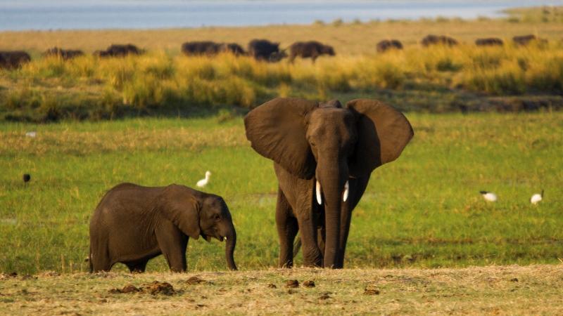 Trump revoga proibição de entrada nos Estados Unidos de troféus de caça de elefantes