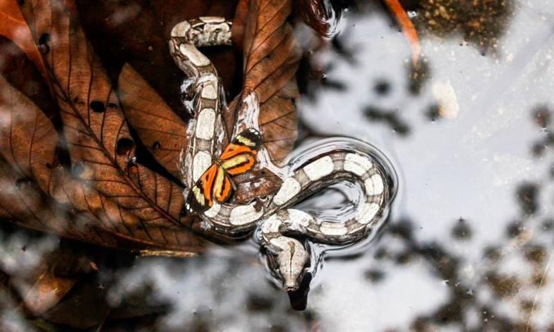 Felipe Tubarão é o grande vencedor do 1o Concurso Conexão Planeta de Fotografia de Animais