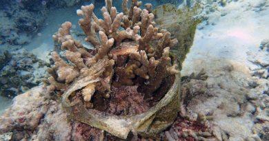 plástico enrolado no coral
