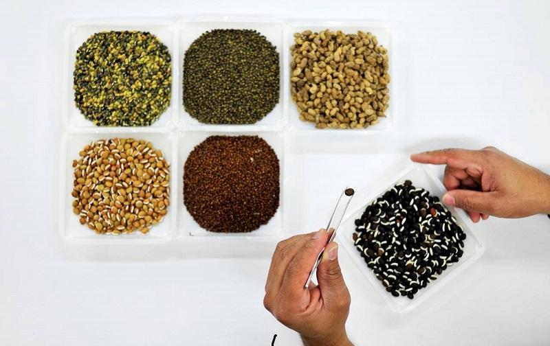 Banco mundial de sementes chega à marca de 1 milhão de grãos