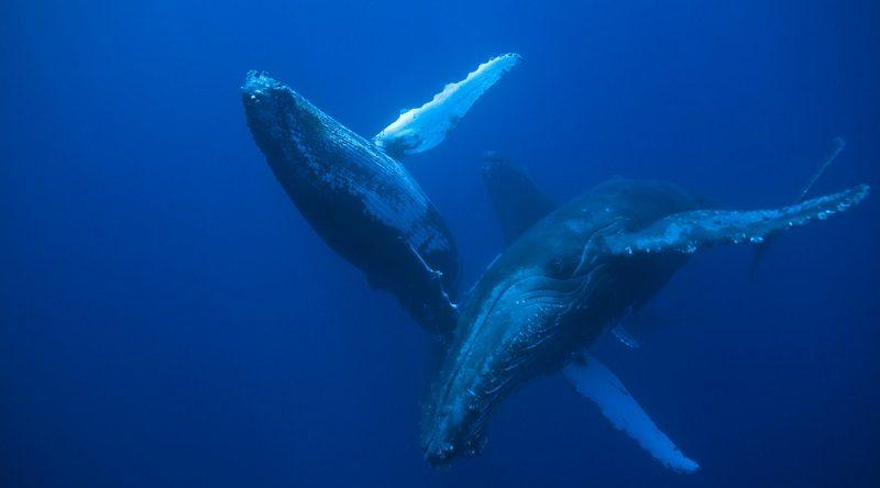 Brasil terá duas novas reservas de conservação marinha, criando assim, o maior conjunto de áreas protegidas do Atlântico Sul