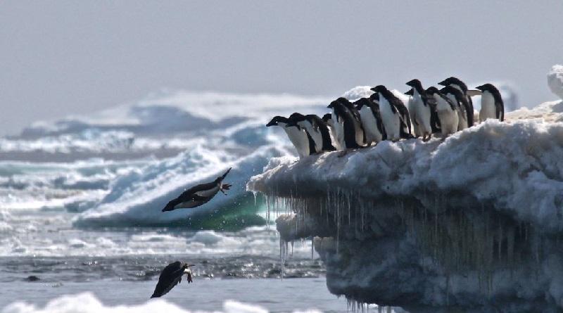 Colônia com 1,5 milhão de pinguins é descoberta na Antártica