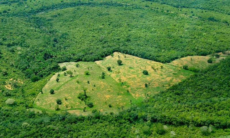 Desmatamento na Amazônia cresce mês a mês e Bolsonaro diz que dados do Inpe são 'mentirosos'