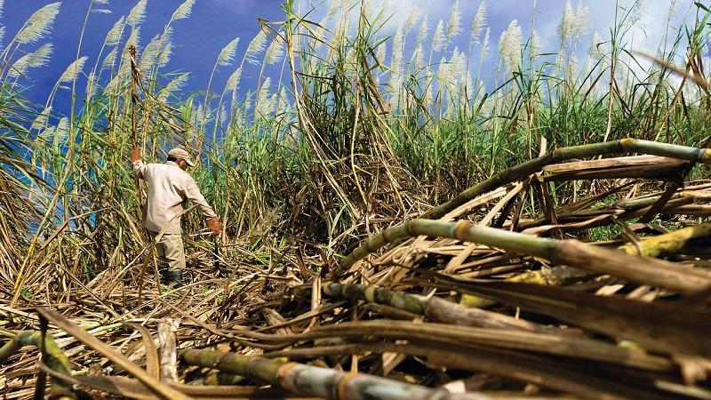 Bolsonaro abre a exploração da Amazônia para a indústria da cana