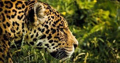 Caatinga ganha duas novas áreas protegidas, entre elas, o Parque Nacional do Boqueirão da Onça