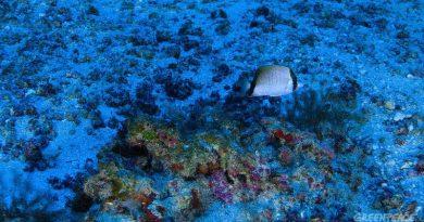 Extensão dos corais da Amazônia é seis vezes maior do que estimado inicialmente