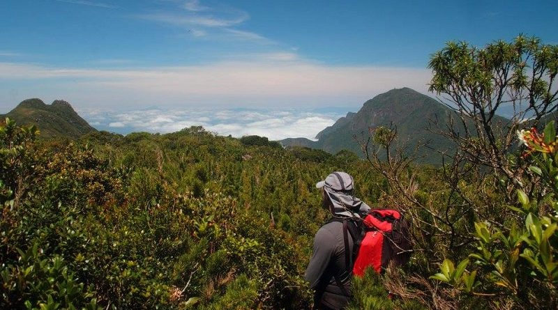 Caminho da Mata Atlântica vai ligar 3 mil km de trilhas no Brasil