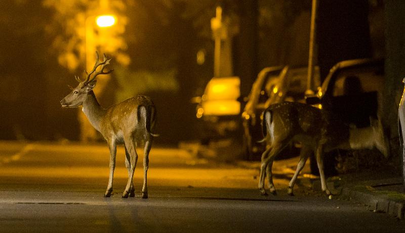 animais de hábitos diurnos estão se transformando em noturnos por