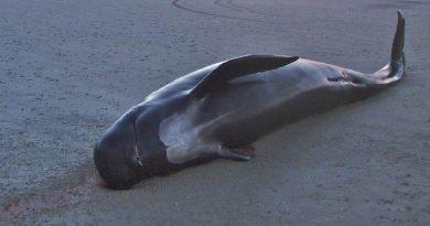"""""""Às vezes o cara pega o canudinho, tem uma baleia lá e ele põe na boca dela"""", diz presidente da Fiesp, em entrevista sobre plástico"""