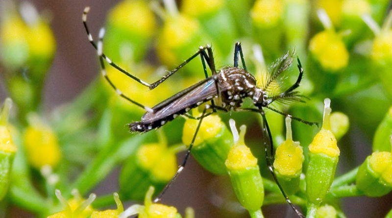 Brasil tem aumento de 599% nos casos de dengue em 2019