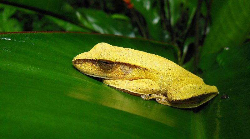 Biodiversidade dos trópicos está em colapso