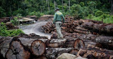 Brasil é o país do mundo que teve mais perda florestal em 2017