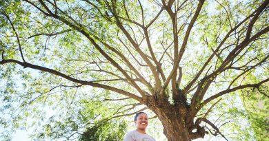 projeto dá voz às àrvores do sul do Brasil