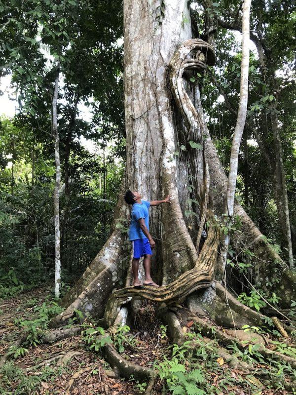 As árvores fantásticas do Rio Negro - Conexão Planeta 2754f44232d