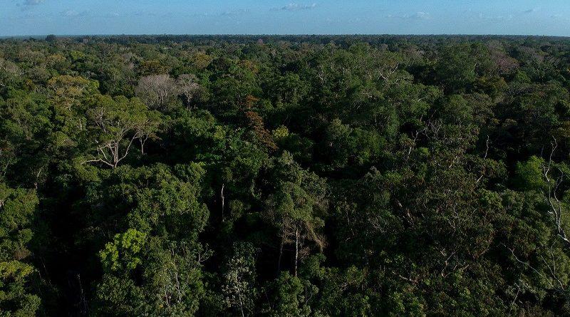 Em menos de uma hora, deputados de Rondônia acabam com mais de meio milhão de hectares de áreas protegidas