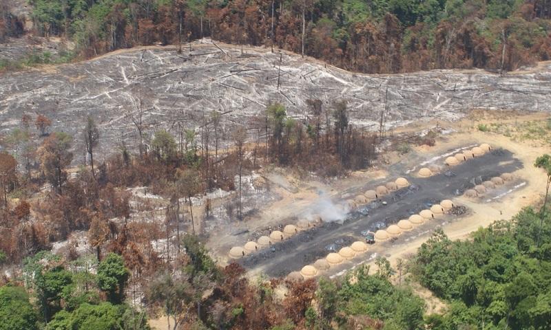 Políticos da bancada ruralista são cúmplices da destruição da Amazônia, com apoio de multinacionais, denuncia ONG Amazon Watch