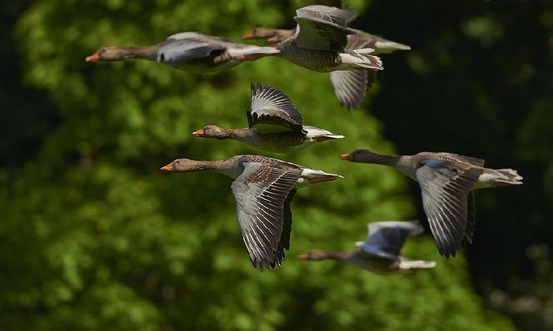 """Trump quer """"flexibilizar"""" lei de 100 anos de proteção a aves migratórias"""