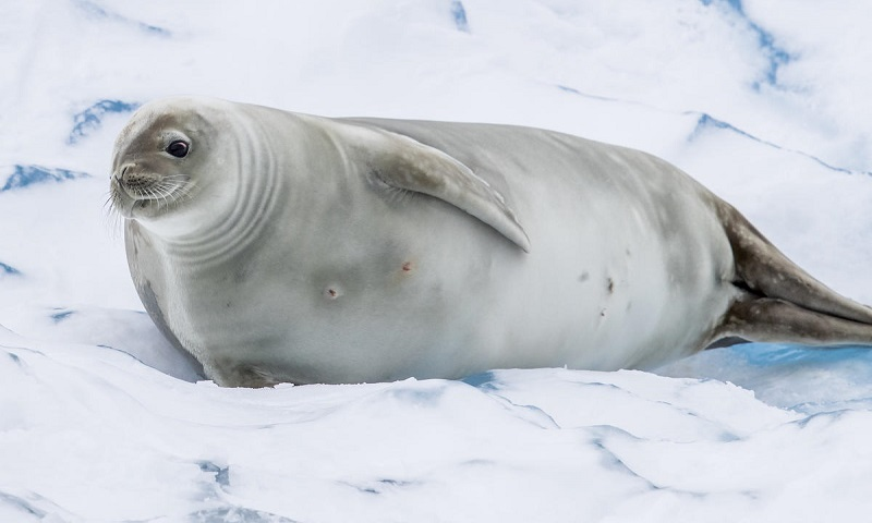 Chegou a hora de criar o Santuário na Antártica
