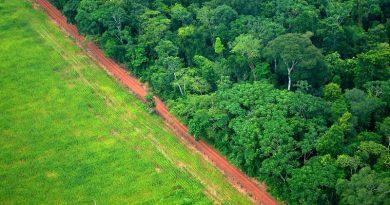 Desmatamento na Amazônia em agosto é 199% maior do que mesmo período do ano passado
