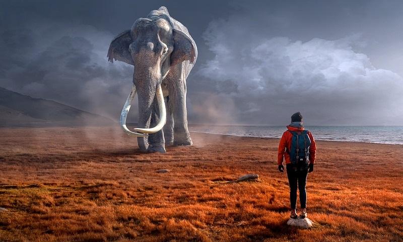 Humanidade destruiu 2,5 bilhões de história da evolução de centenas de espécies de mamíferos