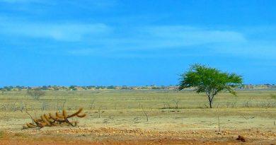 Calor prejudicará agricultura e aumentará pobreza no Brasil, alerta ONU