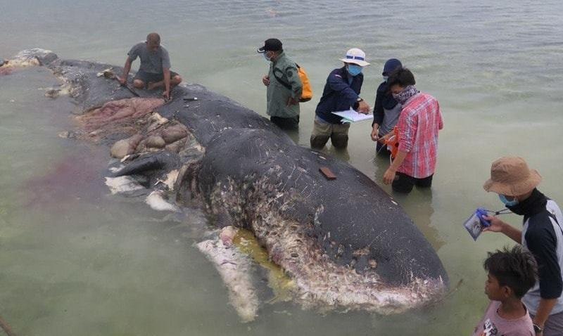 Baleia encontrada morta na Indonésia tinha sacolas, sandálias e mais de 100 copos plásticos no estômago