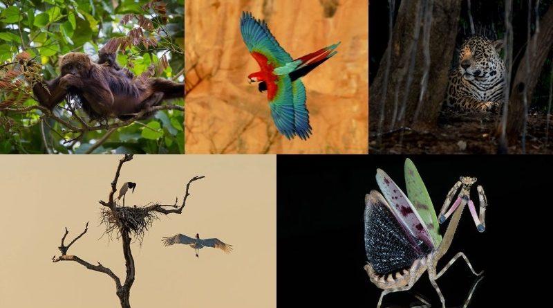 Conheça os finalistas do 2o Concurso Conexão Planeta de Fotografia de Animais!