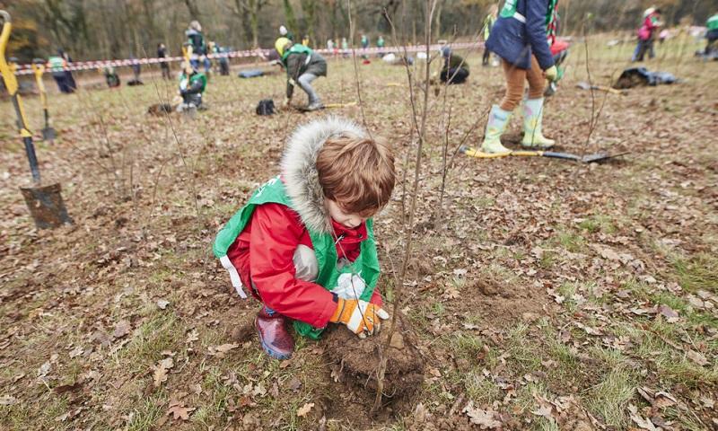 Moradores de Londres vão plantar 80 mil árvores no final de semana