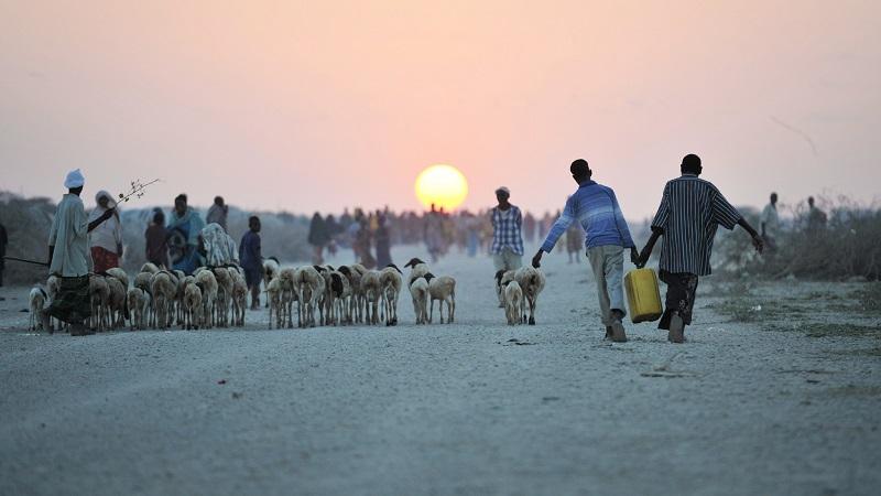 """""""Se não dermos um basta à perda da biodiversidade, podemos enfrentar nossa própria extinção"""", alerta ONU"""