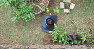 sobre hortas e crianças